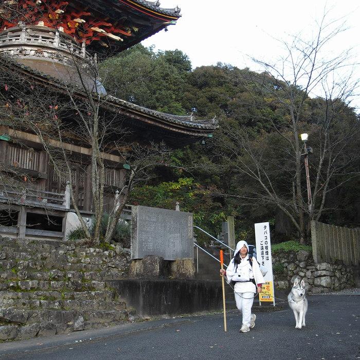 Memory of the second pilgrimage 1200km with husky HANA_c0049299_13434349.jpg
