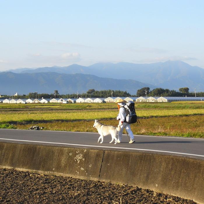 Memory of the second pilgrimage 1200km with husky HANA_c0049299_1357739.jpg