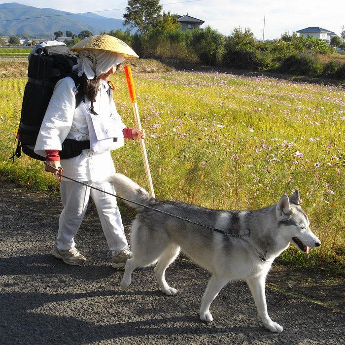 Memory of the second pilgrimage 1200km with husky HANA_c0049299_1414795.jpg