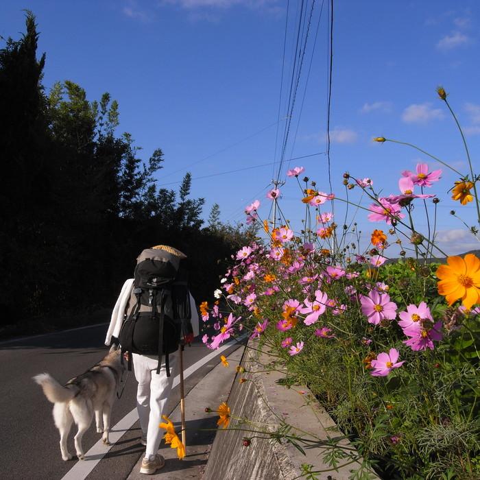 Memory of the second pilgrimage 1200km with husky HANA_c0049299_1421443.jpg