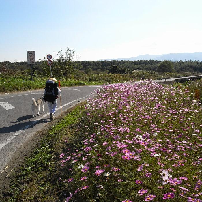 Memory of the second pilgrimage 1200km with husky HANA_c0049299_1531273.jpg