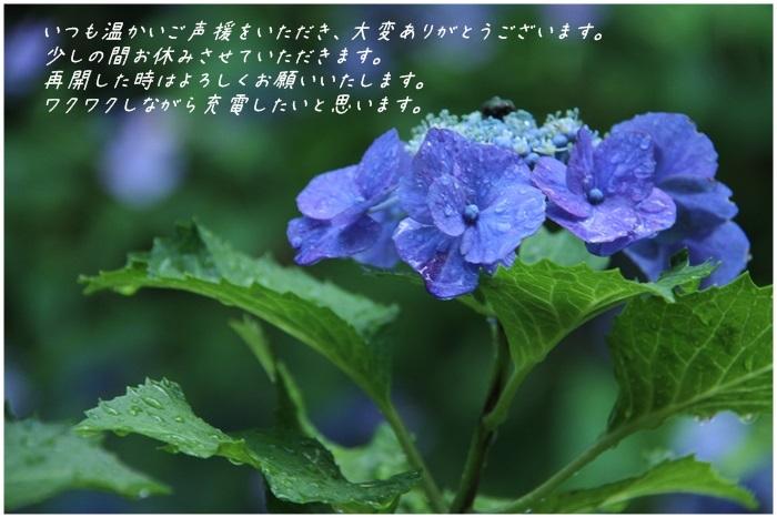 c0037200_23132564.jpg