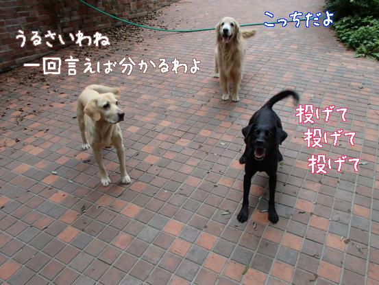 f0064906_16474727.jpg