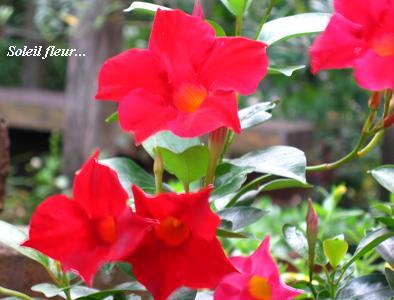自然の恵みが、与えてくれる♪_c0098807_18273046.jpg