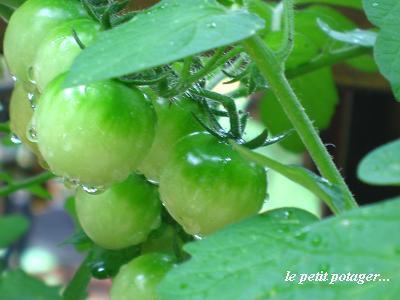自然の恵みが、与えてくれる♪_c0098807_193335.jpg