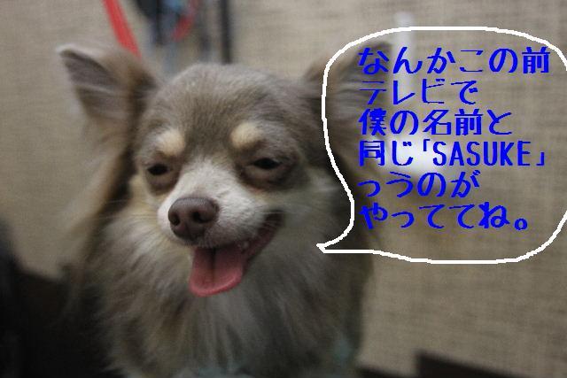 b0130018_81281.jpg