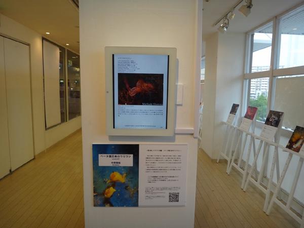 海遊館のウミウシ写真展 会場風景3_c0193735_22544354.jpg