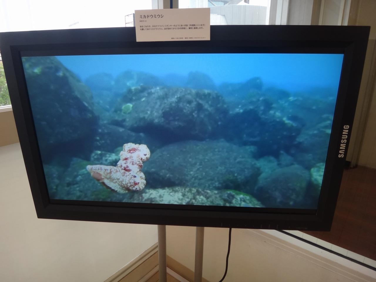 海遊館のウミウシ写真展 会場風景3_c0193735_22551454.jpg