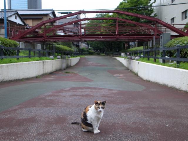 プロ意識の猫_d0057843_0402850.jpg