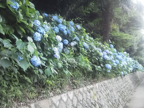 がじゅたんライヴ東京_b0050651_1724499.jpg