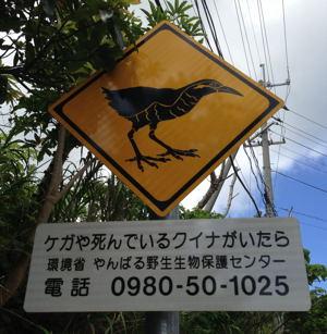 沖縄の山原にてヤンバルクイナ_d0099854_21594361.jpg