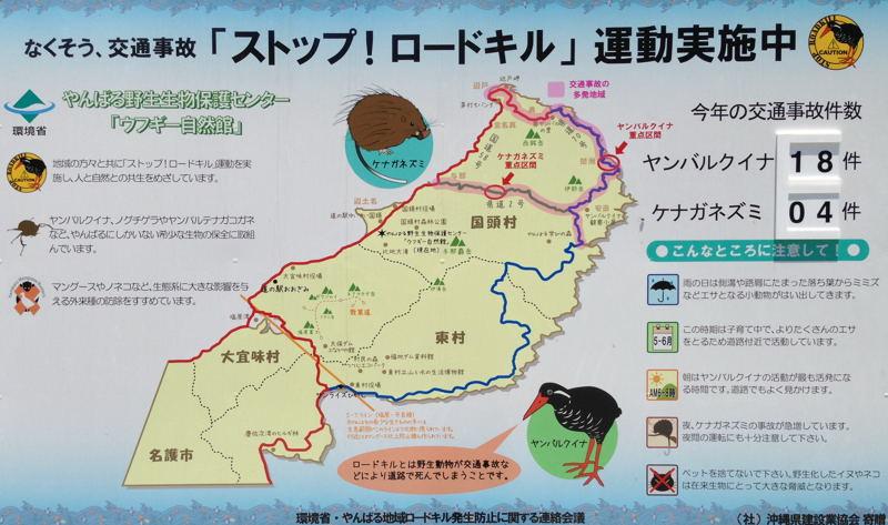 沖縄の山原にてヤンバルクイナ_d0099854_22102293.jpg