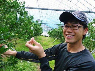 幻の柑橘「せとか」 究極ゆえの手のかかる栽培方法!その2_a0254656_17131011.jpg