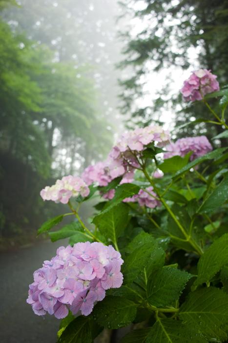 朝靄の中_d0231263_22322650.jpg