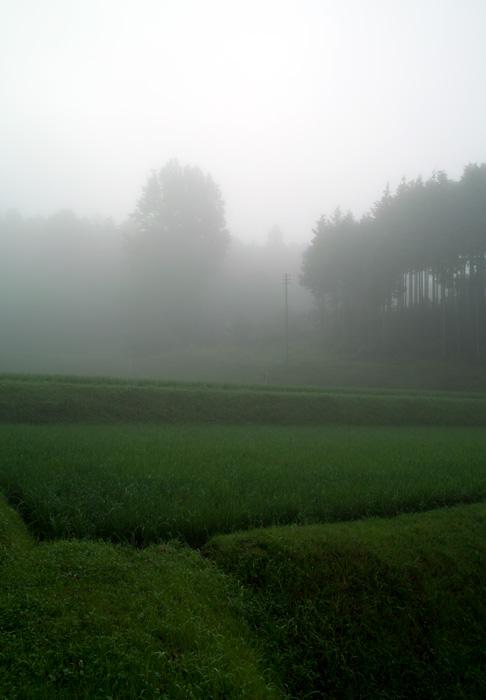朝靄の中_d0231263_22345456.jpg