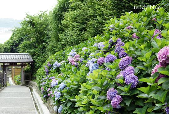 Kamakura Pilgrimage  鎌倉三十三観音巡り 二日目_e0253364_9385182.jpg
