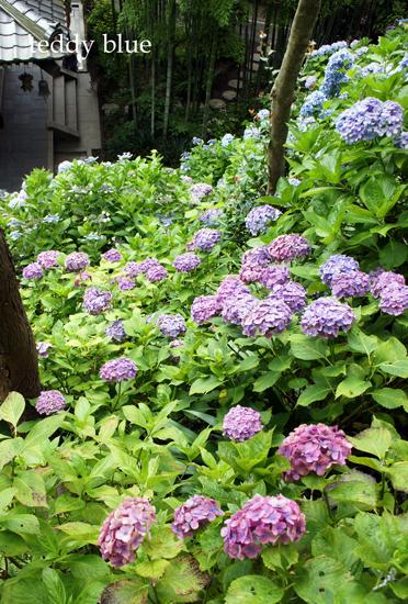 Kamakura Pilgrimage  鎌倉三十三観音巡り 二日目_e0253364_9422227.jpg