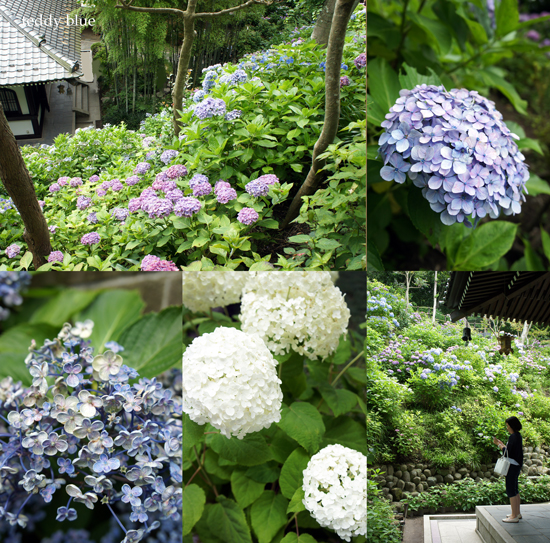 Kamakura Pilgrimage  鎌倉三十三観音巡り 二日目_e0253364_9431863.jpg
