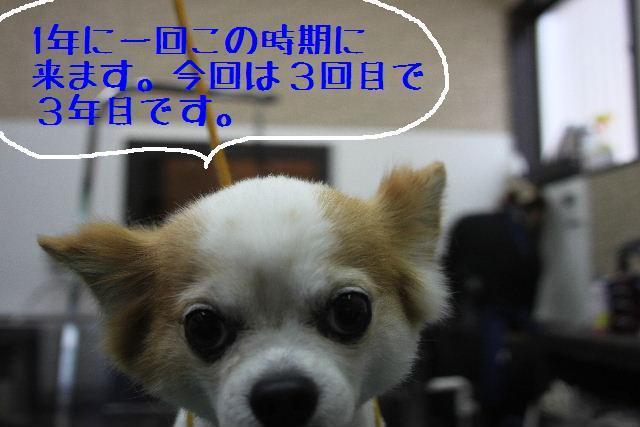b0130018_0281435.jpg