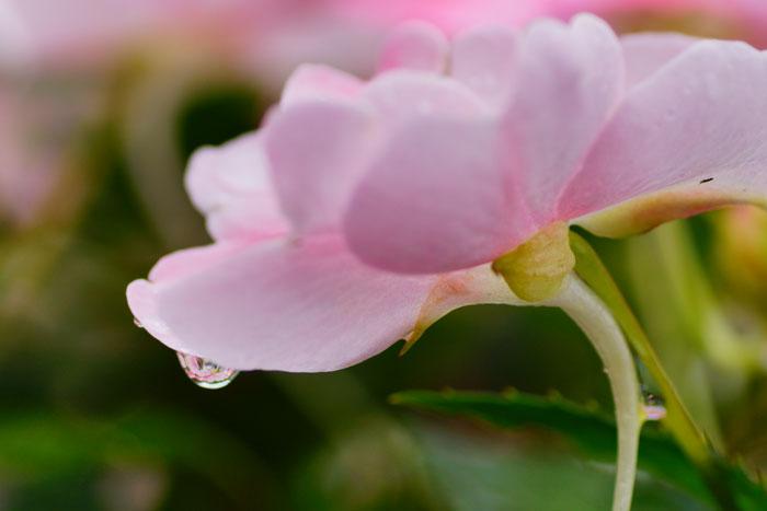 雨の花_e0077521_22454293.jpg
