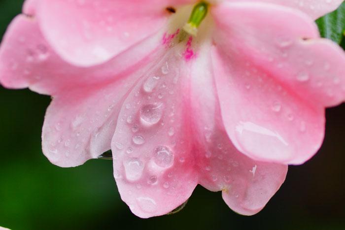 雨の花_e0077521_2245559.jpg