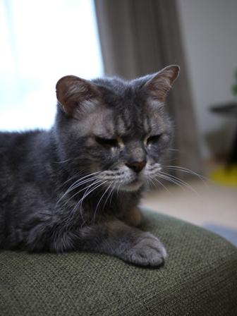 猫のお友だち ニャンコ先生くん八くん九くん編。_a0143140_8413718.jpg