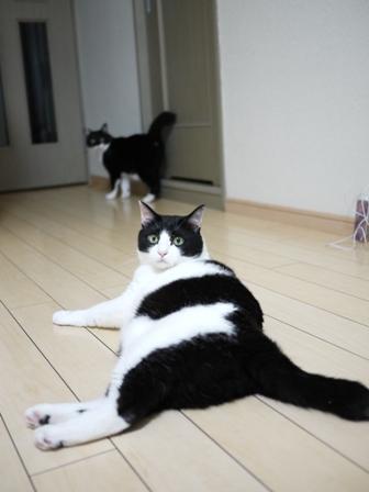 猫のお友だち ニャンコ先生くん八くん九くん編。_a0143140_842081.jpg