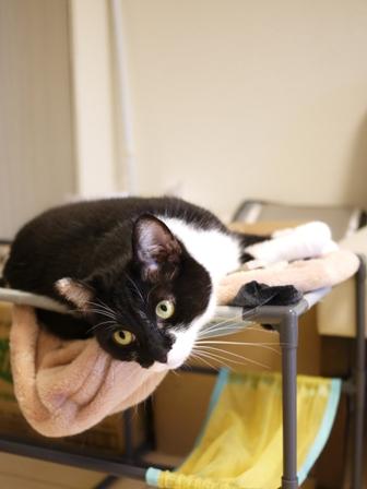 猫のお友だち ニャンコ先生くん八くん九くん編。_a0143140_8422170.jpg