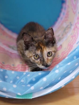 猫のお友だち ようちゃん編。_a0143140_8502178.jpg