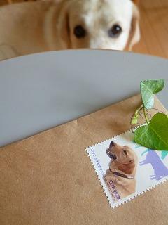 thank you     ラブラドールの切手♪_a0165160_7454346.jpg