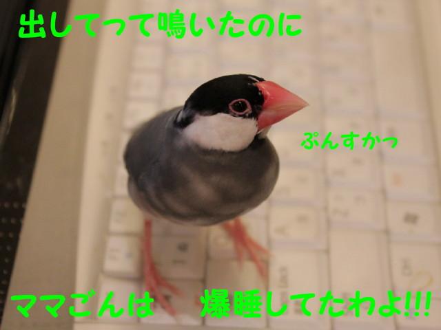 b0158061_20373714.jpg