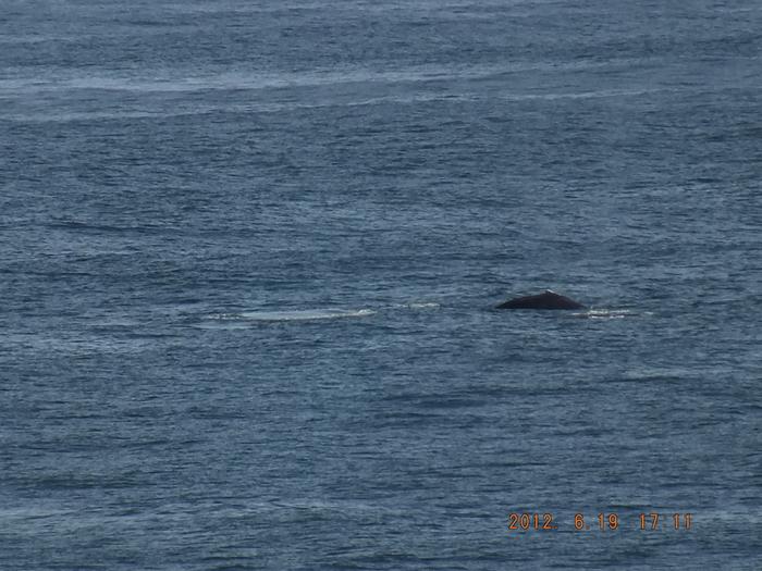 ファン・デ・フカ海峡 Juan de Fuca Strait_e0140365_027914.jpg