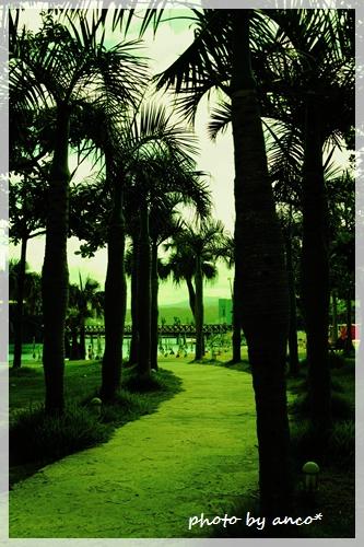 tropical_a0237482_16492826.jpg