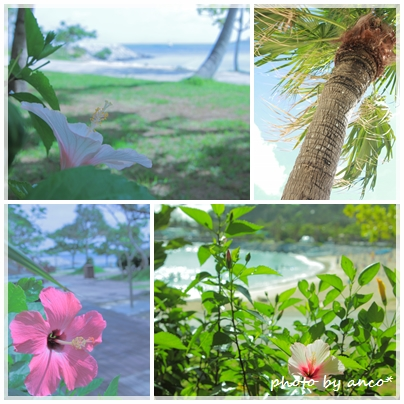 tropical_a0237482_1650827.jpg