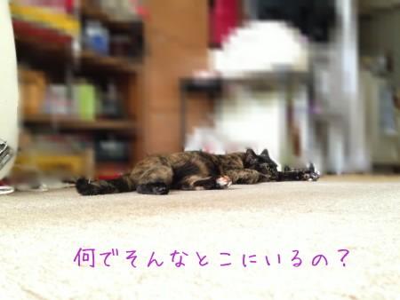 f0091785_16514737.jpg