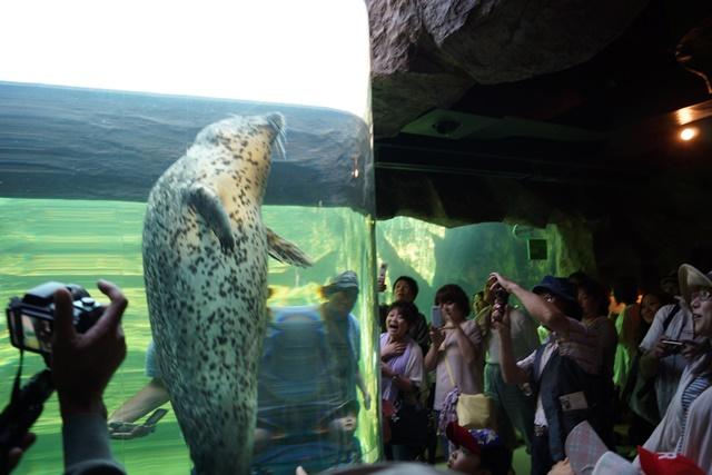 藤田八束の動物園日記、素敵な旭山動物園日記、素敵な動物達と旭山動物園、橋下徹代表旭山動物園を視察して_d0181492_0571741.jpg