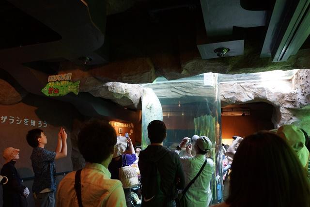 藤田八束の動物園日記、素敵な旭山動物園日記、素敵な動物達と旭山動物園、橋下徹代表旭山動物園を視察して_d0181492_057254.jpg