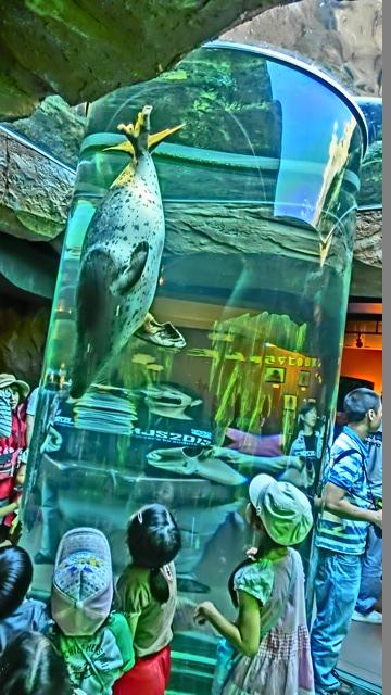 藤田八束の動物園日記、素敵な旭山動物園日記、素敵な動物達と旭山動物園、橋下徹代表旭山動物園を視察して_d0181492_10473.jpg