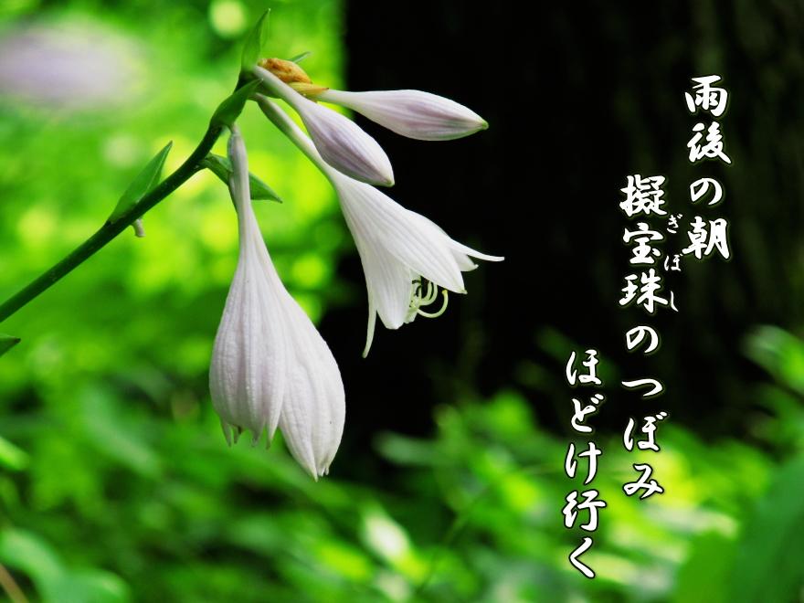 f0137096_2164640.jpg