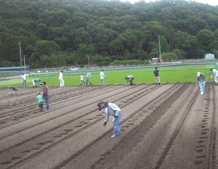 大豆の種蒔き_c0081499_2275297.jpg