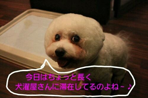 b0130018_0221327.jpg