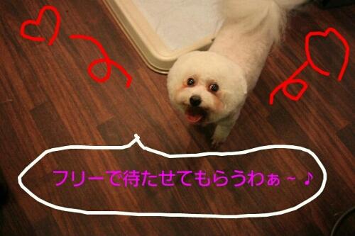 b0130018_0225352.jpg