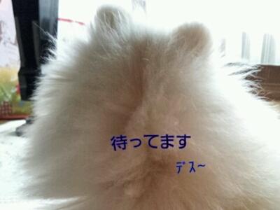 b0167519_1632121.jpg