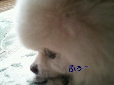 b0167519_1633420.jpg