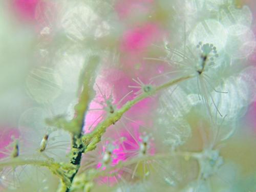 b0137083_20342955.jpg