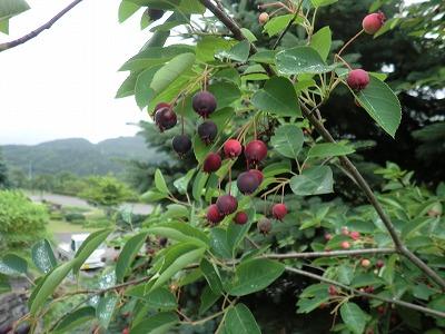 木の実が・・・_b0219993_15535450.jpg