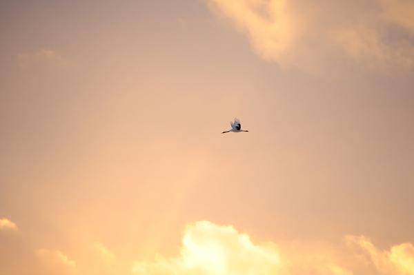 孤翔 ~遙かなる君のもとへ~_e0059494_20422270.jpg