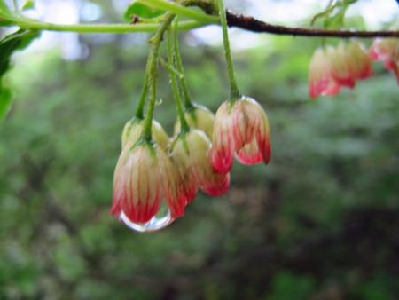 池の平湿原花情報_e0120896_6503017.jpg