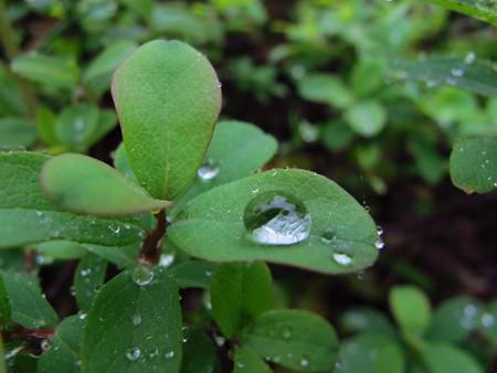 池の平湿原花情報_e0120896_653393.jpg