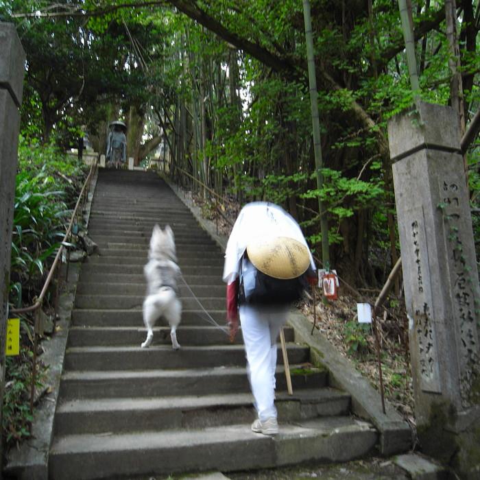 Memory of the second pilgrimage 1200km with husky HANA_c0049299_16505011.jpg